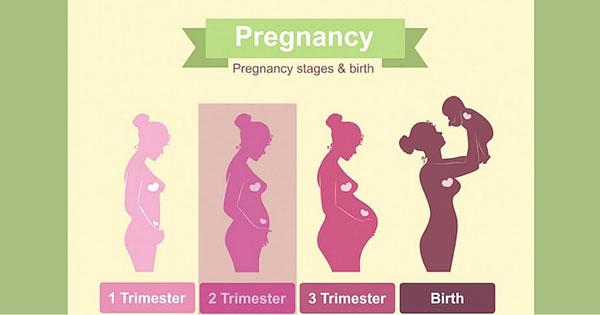pregnancy-trimesters.jpg